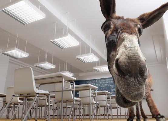 Donkey School
